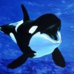 Как работает дельфинарий в москве на вднх