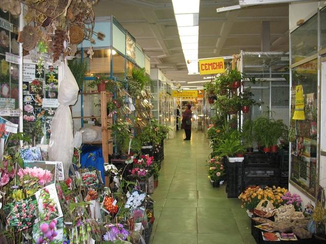 цветы семенами в москве дешево