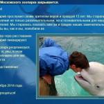 Дельфинарий московского зоопарка