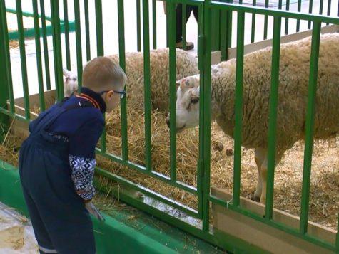 АГРОФЕРМА (АгроФарм) 2021: Выставка по животноводству на ВДНХ