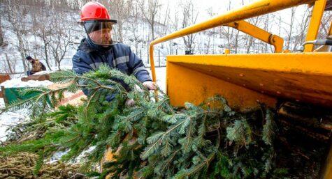 Где можно сдать старую новогоднюю ёлку в Москве. Адреса.