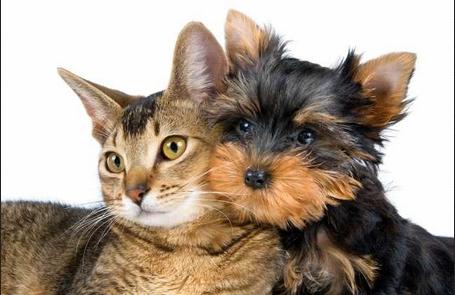 Выставки кошек в Сокольниках. Выставки собак.